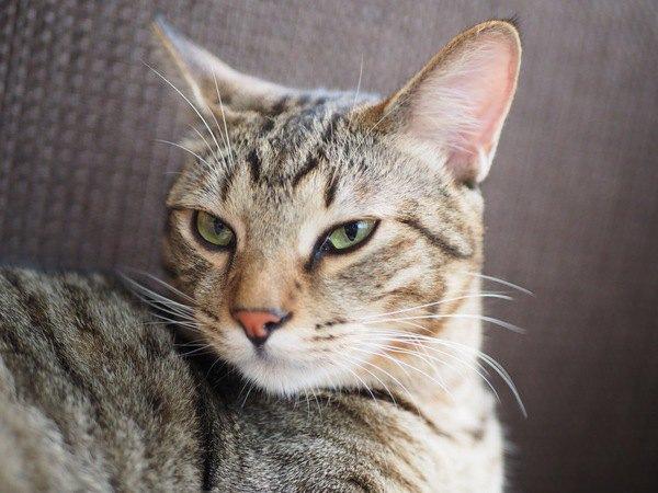 猫は『無愛想』って本当?