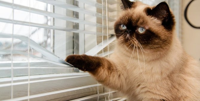 お留守番が苦手な猫の特徴5選