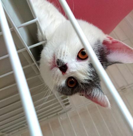 『おいで』で猫が寄ってくるようになる方法4つ