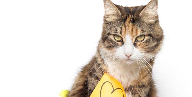 猫の付箋がかわいい!オフィスで学校で使えるおすすめ商品7つ