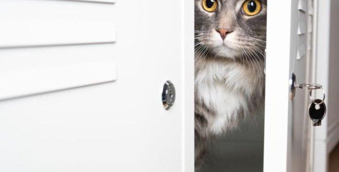 隠れている猫にしてはいけないNG行為4つ!無理やり出そうとするのはよくない?
