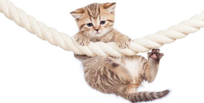 猫が『助けて!』と伝えたい時にみせる行動4つ