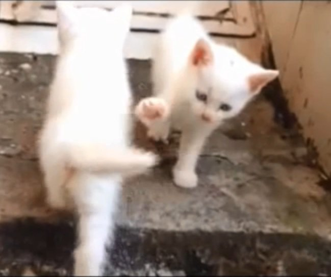 せ、切ない…!ハイタッチを華麗にスルーされてしまった子猫