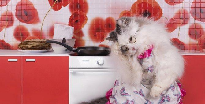 老猫や食べこぼしをする猫に便利なよだれかけ!おすすめ商品や作り方