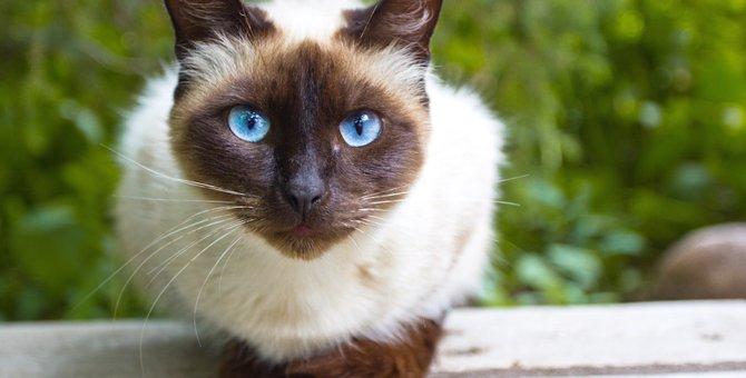 猫が持ってる6つの感情と飼い主にする6つのサイン