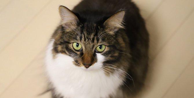 猫が『毛玉を吐く』3つのワケ!飼い主がすべき予防策とは?