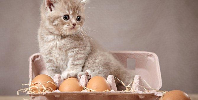 猫は卵を食べても大丈夫?いろいろ説があるけどホントはどうなの?