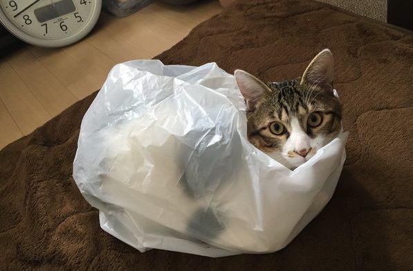 猫は高いところ·狭いところがなぜ好き?