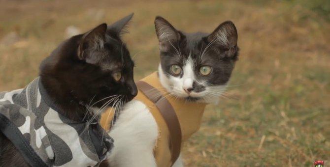 あの有名なゾンビ映画のパロディを猫ちゃんと共に再現!