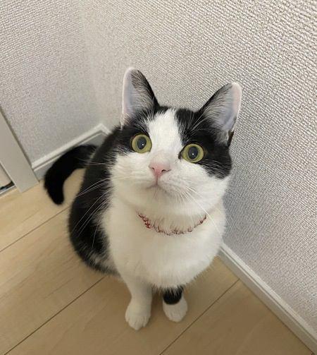 猫のオシャレな写真を撮る方法5つ