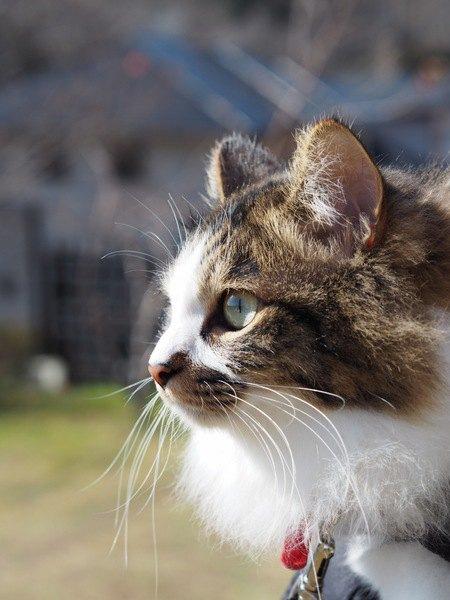 完全室内飼育の猫は「世界」をどう認識してる?