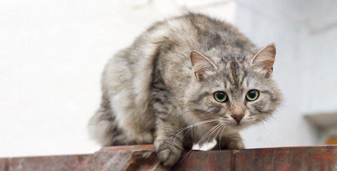 猫が忍び足になるのはどうして?5つの心理