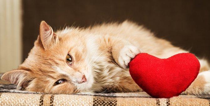 猫の突然死の原因。注意すべき病気と予防法
