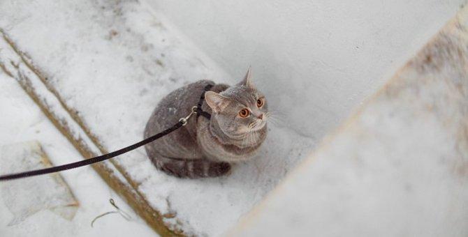 猫に散歩させる必要はある?ストレスはかからない?