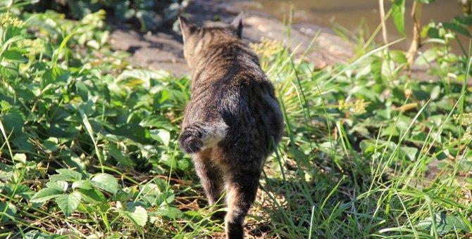 猫のしっぽは十にゃん十色!可愛いだけじゃない意外なヒミツ