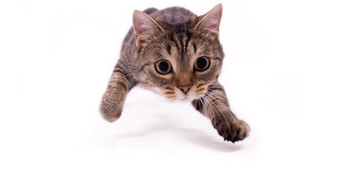 猫が走り回るのはストレスのサイン?解消できる3つの方法、おすすめ商品まで