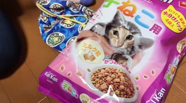 フードの袋で作った顔出しパネル。子猫は顔を出してくれるのか?
