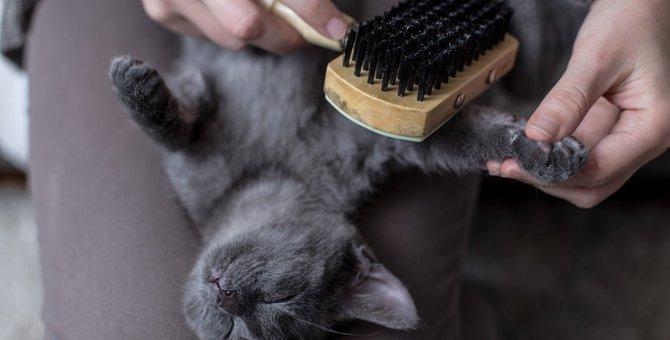 家庭でできる猫の日常ケア3つ!飼い主がしてあげられる事