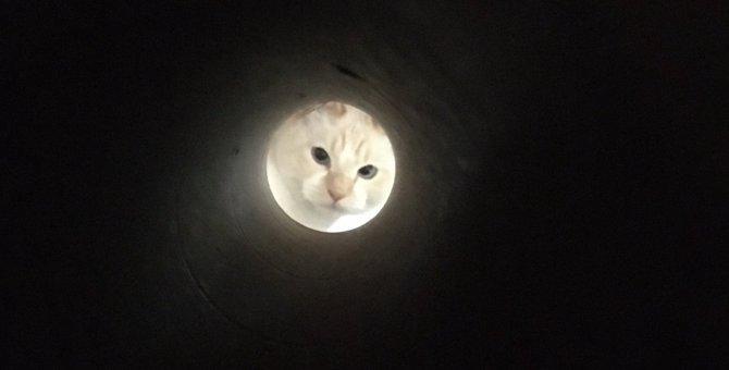 弟子が亡き師匠を偲んで見上げた夜空の猫に10万人が大爆笑!