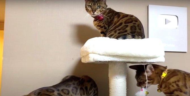 誕生日プレゼントにキャットタワー!組み立て中も集まる猫さんたち♡