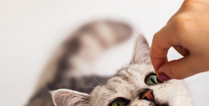 猫は鱈を食べても大丈夫?注意点や鱈を使ったおやつも紹介