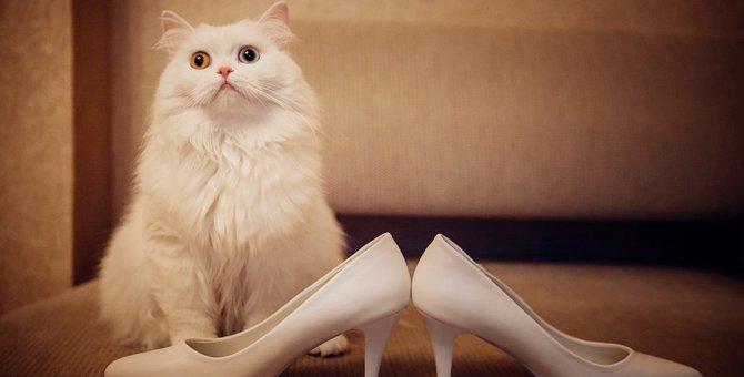 猫モチーフの靴がおしゃれ!パンプスやスニーカーなどおすすめアイテム24選