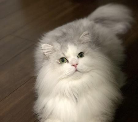 猫アレルギーでも猫を飼える?どうしても飼いたい時の対策5つ