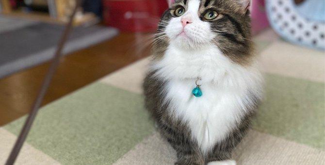 猫と自宅で『デート』を楽しめる方法3選!ちょっとした工夫で気分転換できるかも?