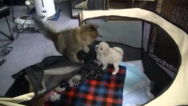 「さあ、今だニャ!」猫ちゃんのファインプレーでワンコ大脱走!