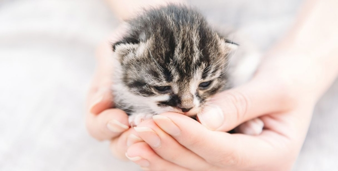 猫が震える6つの原因と考えられる病気