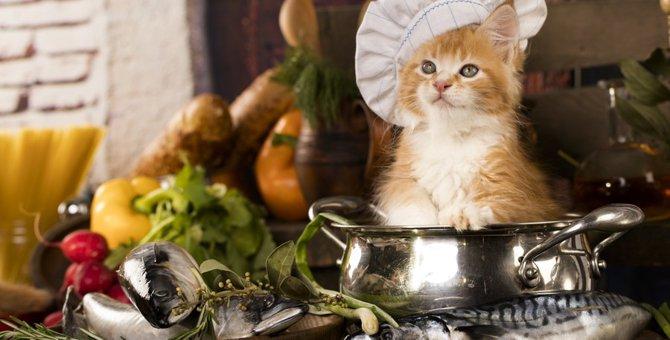 猫は昆布を食べてもいい?与える時の注意点
