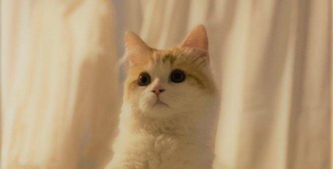 LAYLAの12猫占い【8/31~9/6】のあなたと猫ちゃんの運勢