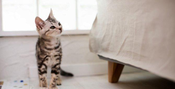 猫付きマンションで始める猫との新しい生活