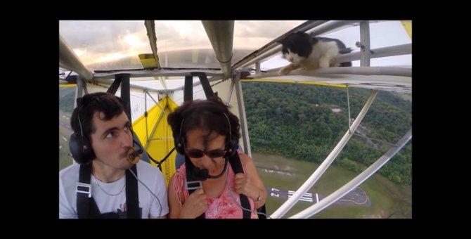 猫を乗せたままフライト?!こっそり軽飛行機に忍び込んだ猫ちゃん