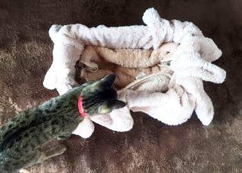 猫の冬用ベッドを手作りしよ♪要らなくなったダンボールとフリースで簡単DIY♪
