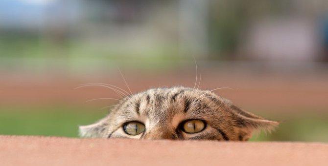 猫が雷を怖がる時の対処法