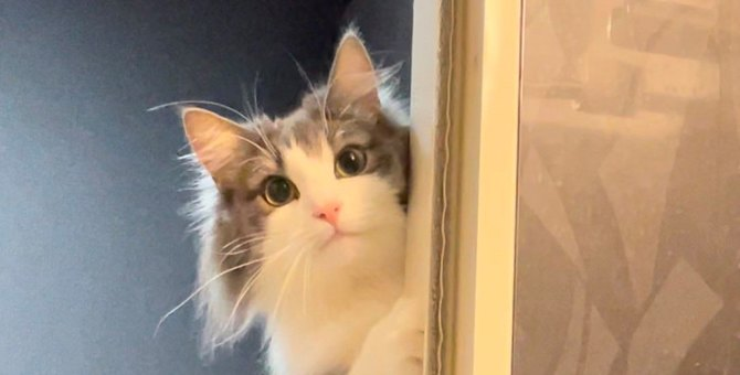 【話題】『そんなに水浴びて…』心配げな猫さんの表情が秀逸