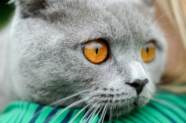 猫がゴロゴロいう仕組みは謎だらけ!3つの憶測