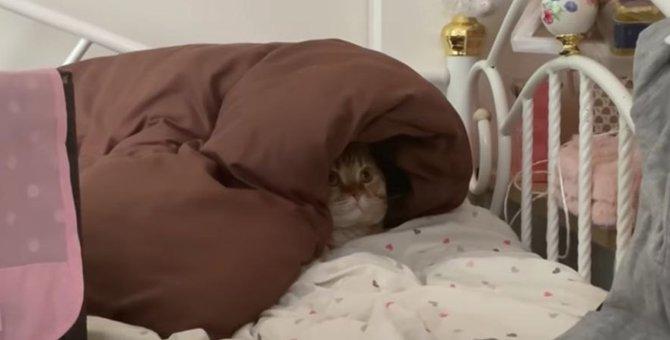 丸見えだけど隠れたつもり?猫ちゃんのひとりかくれんぼ