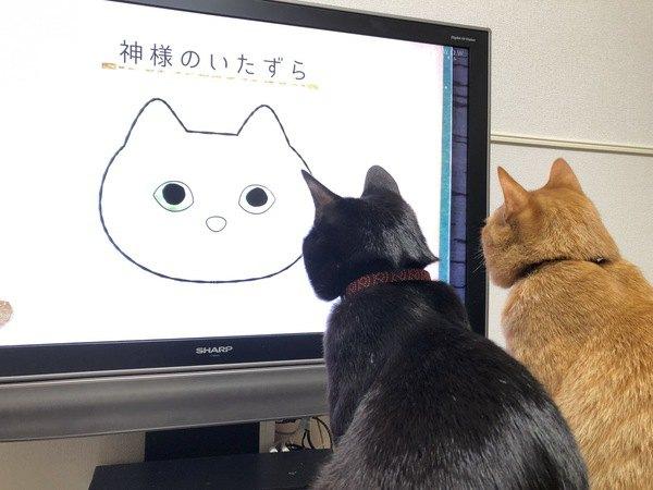 猫は「テレビの中の猫」をどう思ってる?