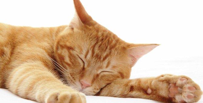 猫の呼吸が早い時に注意すべき事と考えられる病気