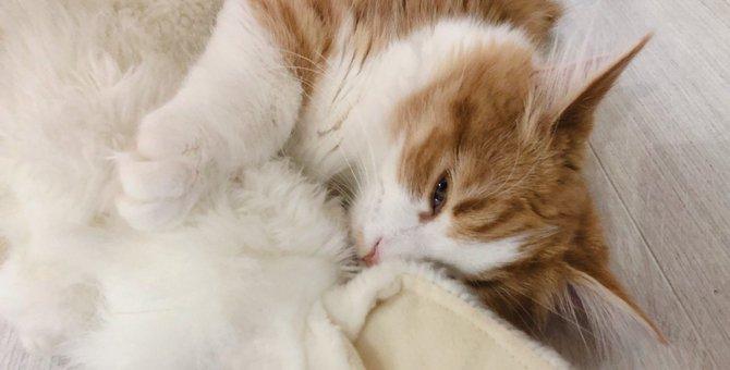 Laylaの12猫占い 11/25~12/1までのあなたと猫ちゃんの運勢