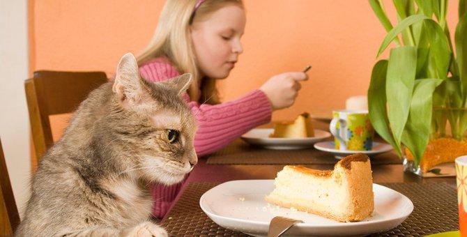 猫にチーズケーキは食べさせても大丈夫?食べた時の対処法