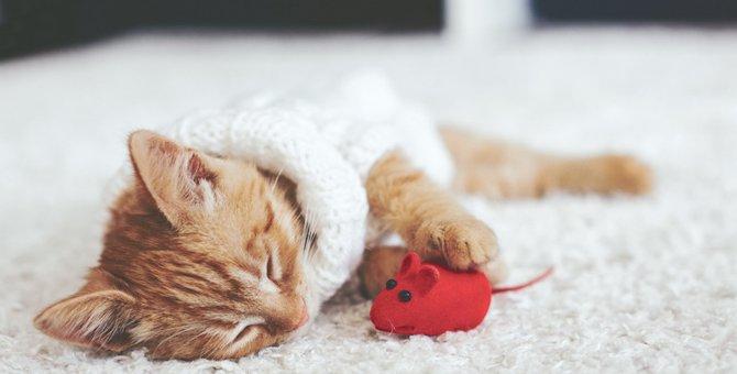 猫が他の猫や飼い主を抱きしめて眠るのはどうして?