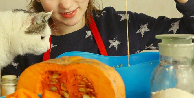 猫にかぼちゃは与えても大丈夫!6つの健康効果とおすすめレシピ