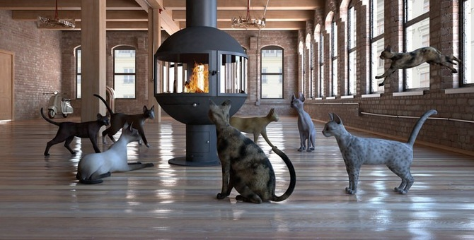 猫が暖かい場所を好む理由とその温度
