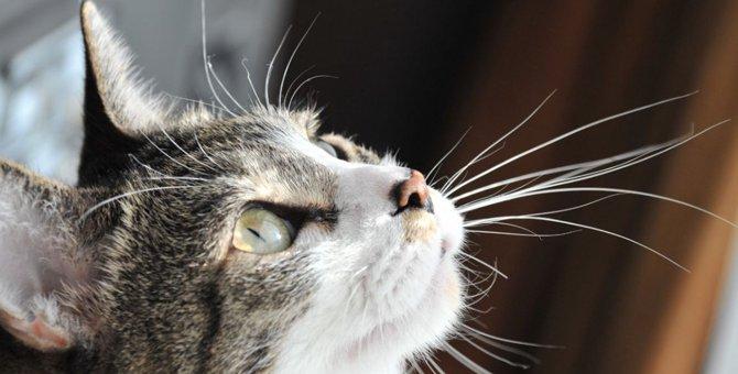 猫のひげを切るのはダメ!その理由とひげが担う重要な役割