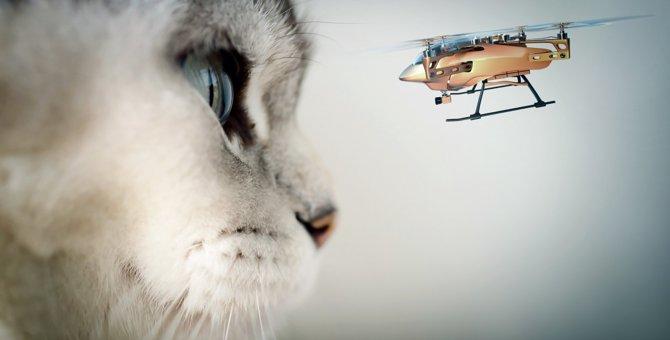 『猫 VS ドローン』因縁の対決をするねこ達がおもしろい