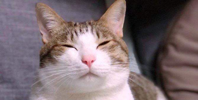 猫が『まったりしている』ときに見せる仕草3つ