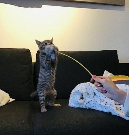 猫と人間の赤ちゃんが同居する時に絶対NGなこと3つ
